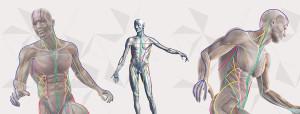 150827 anatomy lines slide_2